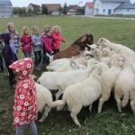 Kindertreff und Schafe